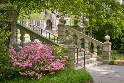 Davison Building steps spring